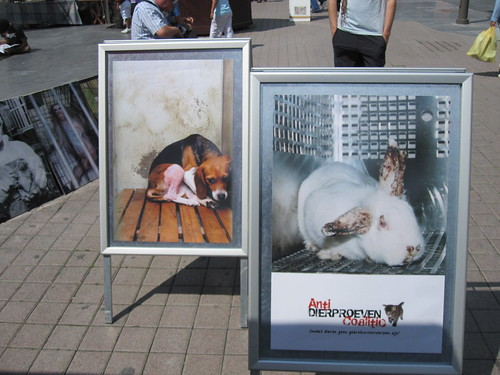 Acation Against Animal Testing