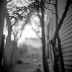 (patrickjoust) Tags: park bw usa white black tree 120 6x6 tlr blancoynegro film home nature leaves analog yard america square lens us leaf reflex md focus shanghai mechanical united side patrick twin maryland super baltimore 150 v epson medium format 100 states manual 500 rodinal joust developed ricoh hampden wyman develop estados 80mm f35 blancetnoir unidos ricohflex v500 gp3 schwarzundweiss 8cm autaut patrickjoust