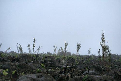 20101113-vs-0810