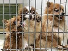 Puppies rescued from puppy mill