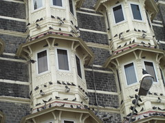Pigeons of the Old Taj Mahal hotel (Say a Prayer)