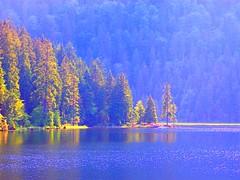 Bavarian Forest 1 (Tobi_2008) Tags: lake nature forest germany bayern deutschland bavaria see natur wald bume smrgsbord bayerischerwald mywinners abigfave theunforgettablepictures colourartaward llovemypic