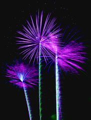 Purple Palm Trees (dan_garner_s) Tags: colors night canon rebel fireworks fourthofjuly coolest xti impressedbeauty