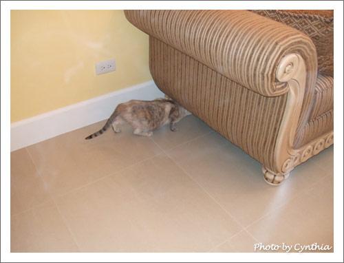 Sora企圖把自己塞進沙發底下