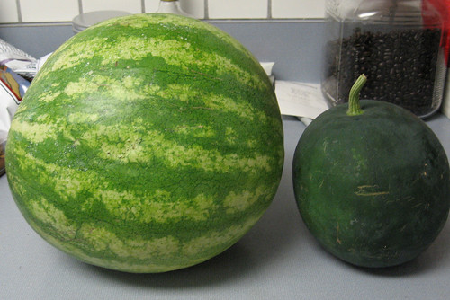 Comparative Watermelons