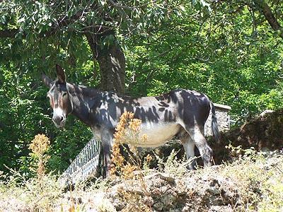 enfin un âne !.jpg