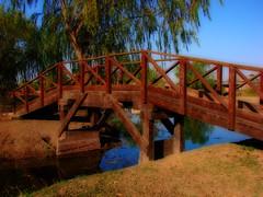 Puente en la Laguna Arguello - Resistencia - Argentina (otogno) Tags: bridge urban naturaleza lake nature argentina argentine puente lago rodent reflex turtle resistencia laguna tortuga chaco nutria orton novideo ארגנטינה argentinien 阿根廷 アルゼンチン 아르헨티나 аргентина أرجنتين αργεντινή