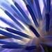 Blue Heart - by ecstaticist