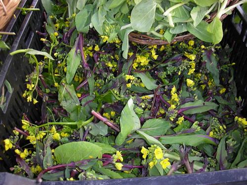 Fava leaves