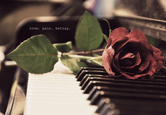 love pain betrayal (tiffany wangg) Tags: love rose pain bokeh redrose piano betray