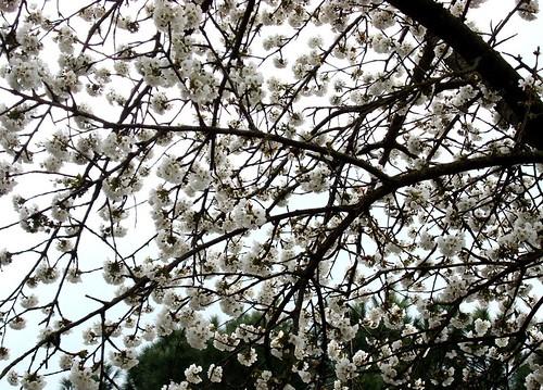 Fruehling 4