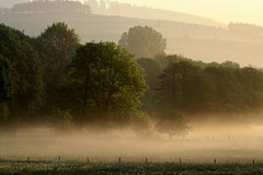 Misty Morning--- (rolfspicture) Tags: sun mist nature fog landscape countryside valley sauerland treesinmist anawesomeshot excapture