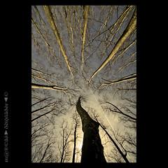 Desde Abajo (m@®©ãǿ►ðȅtǭǹȁðǿr◄©) Tags: españa naturaleza canon árboles sigma natura girona catalunya gerona desdeabajo canoneos400ddigital parcdeladevesa m®©ãǿ►ðȅtǭǹȁðǿr◄© sigma10÷20mmexdc marcovianna