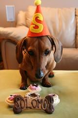 Solomon with his birthday treats - by gizzypooh
