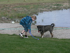 Fetch Rex (Photo Twister) Tags: dog water grass ball puppy doggy pup rex fetch chuckit kidchildatplay