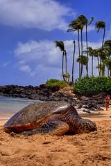 Turtles finally arrive