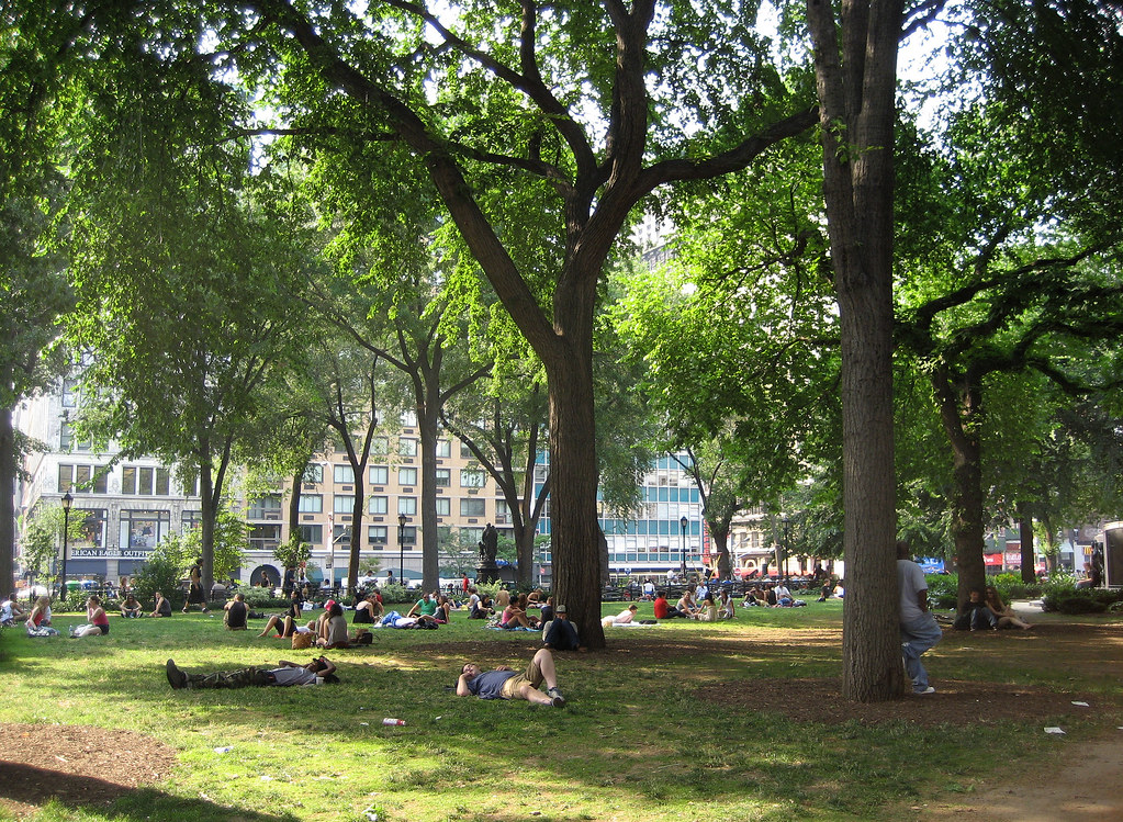 The trees of Union Square Park