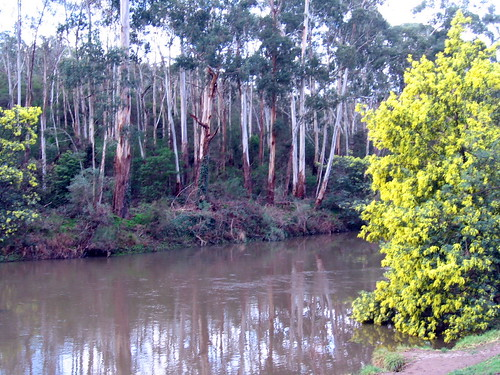 river and wattle