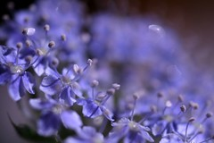 flowers (*setsuna) Tags: flower macro canon purple bokeh violet sigma naturesfinest superbmasterpiece 1on1bokehdofphotooftheweek 1on1bokehdofphotooftheweekaugust2007