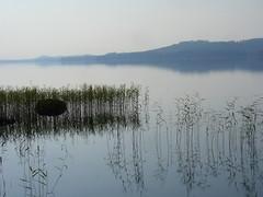 Morning (Lalallallala) Tags: lake reflection water stone finland reeds landscape calm tranquil nilsiä pieksänjärvi