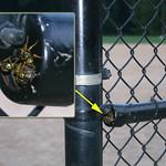 angry wasp nest near baseball dugout thumbnail