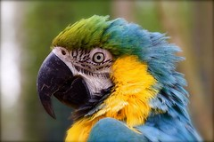 Pretty Polly Portrait