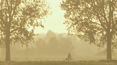 Fiets (Harry Mijland) Tags: holland bicycle utrecht nederland polder fiets maarssen tienhoven dearharry bethunepolder harrymijland