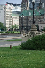 groundhog at Parliament