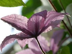 Robe d't (Vronique Delaux On/Off) Tags: flower fleur purple violet montpellier passion mauve passiflora photographe parme vroniquedelaux cratitudesnolimits vroniquedelaux delaux photographemontpellier