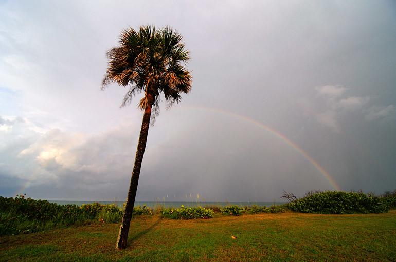 web_palmtree_rainbow_0143_2785