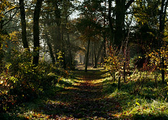 Our own personal Wonderland (e45ty) Tags: autumn trees england art english leaves forest countryside tim earth path alice save adventure fairy danny mysterious paths eastman wonderland tale burton