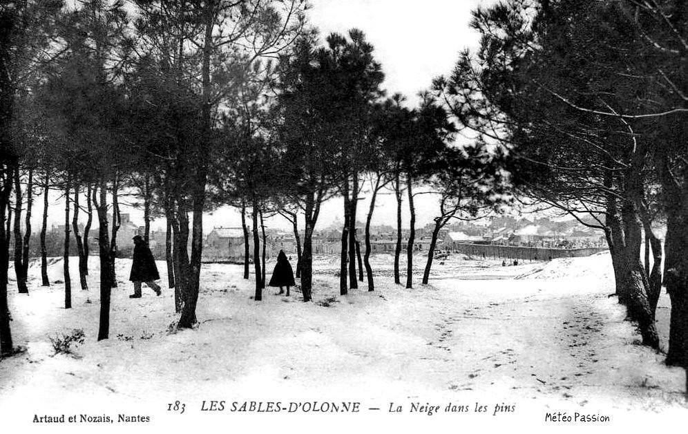neige sur les pins et les dunes des Sables d'Olonnes en janvier 1914