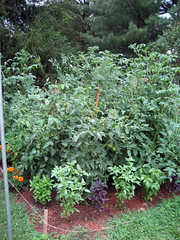 garden_6_28_2007_top_right