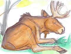 Maine Wildlife Park - Bull Moose