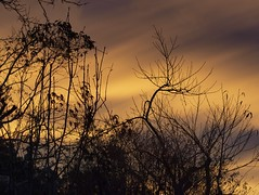 Last night from my back door... (di off the wallaby) Tags: trees winter sunset sky colour clouds mood bare australia tasmania derby mywinners
