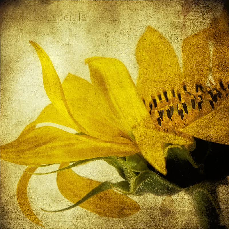 Impresión en amarillo