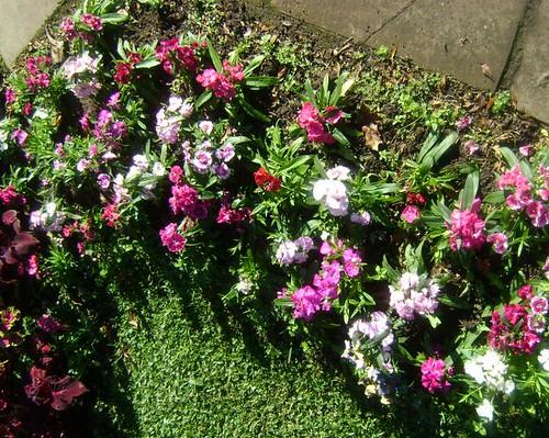 Canteiro de mini-flores
