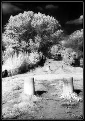 PAESAGGI ONIRICI (www.ioilpeggiore.it) Tags: bw white black alberi 35mm canon ir fiume dream bn via e infrared sentiero bianco negativo nero paesaggio eos3 hoya sogno r72 pellicola poggio onirico infrarosso rullino canon2880 blackwhitephotos sognante paesaggionirici analogcio