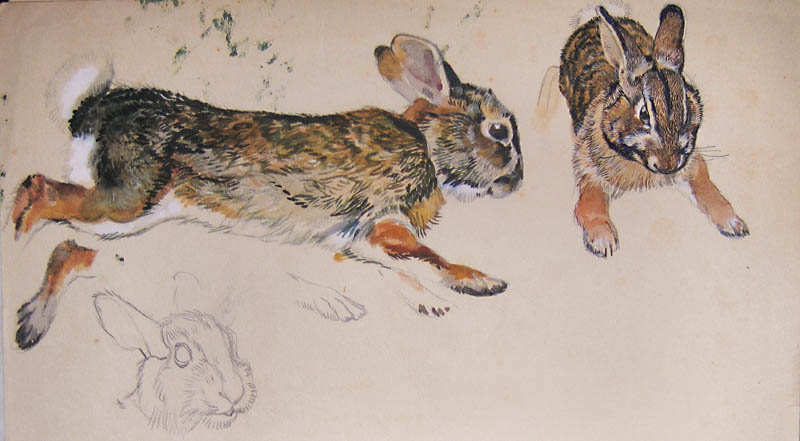 3-6 rabbit