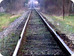 on the tracks (indielove) Tags: railroad birds indiana railroadtracks photo365