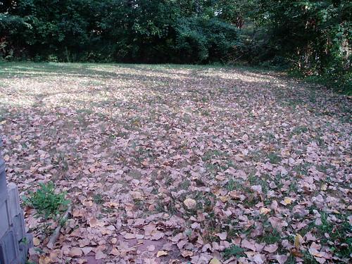 backyard 082007