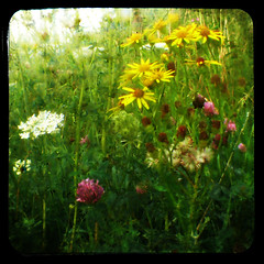 Flowers TTV - by Kat...