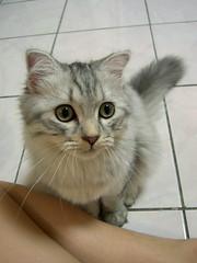 EPSN5472_1 (jacky elin) Tags: cats cat kittens jammy