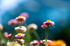 I'm Bokeh | You're Bokeh (docksidepress) Tags: pink blue orange white flower color yellow gold nikon post bokeh d michigan 85mm grandrapids af nikkor f18 manualfocus gp earthday grandrapidsmi d40 happyearthday afnikkor85mm118d afnikkor85mmf18d 85mmf18af frederikmeijergardenssculpturepark