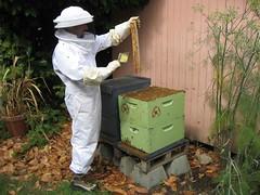 Beekeeping 2547