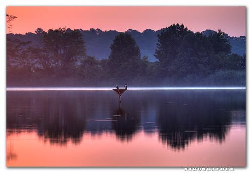 Osprey @ Sunrise, Blackwater NWR, MD