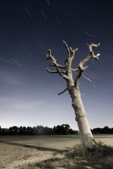 Tree Star Trail ([Nocturne]) Tags: nightphotography tree night star trail startrails photograpy earthandspace noctography Astrometrydotnet:status=failed competition:astrophoto=2009 Astrometrydotnet:id=alpha20090500171898