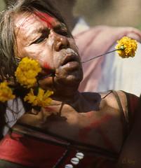 No Pain (Muria 19) (Collin Key) Tags: india maria piercing ritual trance ind littlestories bijapur theworldwelivein adivasi chhattisgarh bastar trancedancer dantewada picswithsoul collinkey gondtribes tribalpeopleofindia