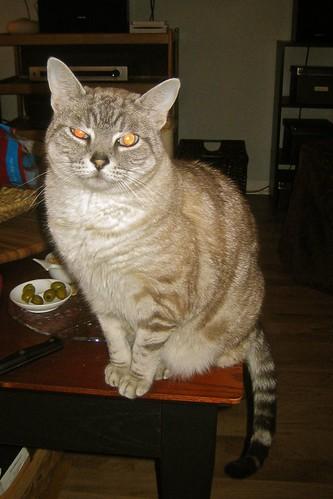 Tia-Nov2009-02