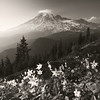 The Mountain (posthumus_cake (www.pinnaclephotography.net)) Tags: trip travel flowers trees sunset summer vacation bw usa mountain plant mountains flower nature beautiful beauty sepia clouds composition forest photoshop canon square landscape outdoors evening washington nationalpark scenery paradise lily dusk hiking availablelight gorgeous peak naturallight trail evergreen alpine filter mountrainier rainier mountrainiernationalpark cascades processing pacificnorthwest handheld 5d rockymountains wildflowers backlit wilderness polarizer treeline mtrainier conifers pinnacle circularpolarizer hoya cascademountains cascaderange mountainrange 1740l monochome canoneos5d tatooshrange pinnaclepeaktrail avalanchelily cs5 canonef1740f4lusm graduatedneutraldensity gnd06 pinnaclesaddletrail